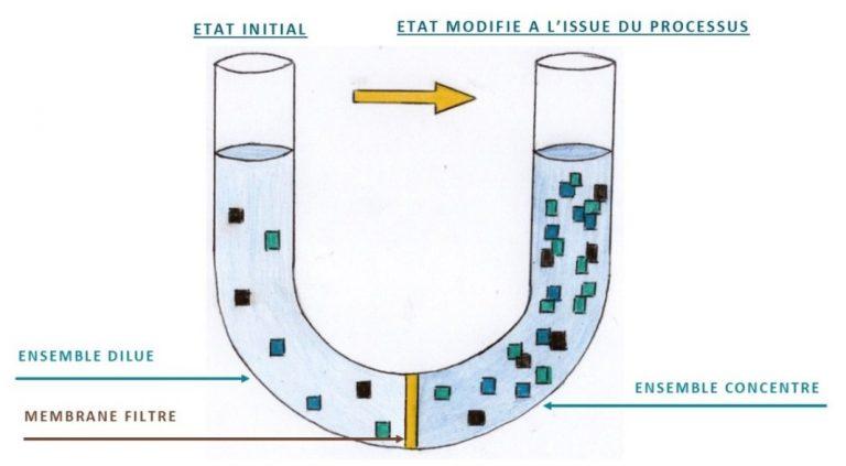 processus osmose
